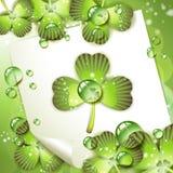 paper ark för växt av släkten Trifolium Royaltyfri Foto