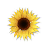 Paper art sunflower. Royalty Free Stock Image