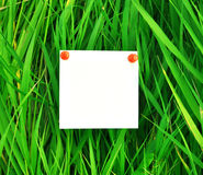 Paper attached to green grass Stock Images