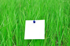 Paper attached to green grass Royalty Free Stock Image