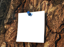 Paper attached to krone of a tree Stock Photos