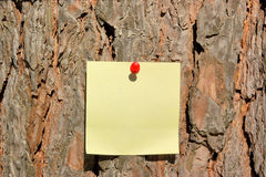 Paper attached to pine bark Royalty Free Stock Photo