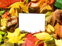 Paper in autumn leaves  Royalty Free Stock Photo