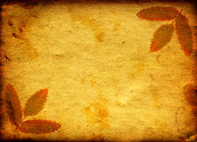 Paper with Autumnal Leaf Royalty Free Stock Photos