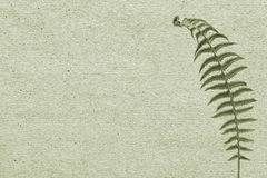 Paper background with green leaf fern Stock Photos