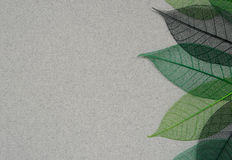 Paper background with leaf skeletons Royalty Free Stock Images