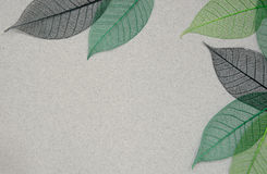 Paper background with leaf skeletons Royalty Free Stock Photography