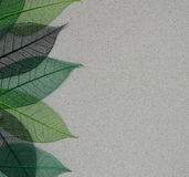 Paper background with leaf skeletons. Gray paper background with green leaf skeletons stock photo