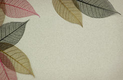 Paper background with leaf skeletons Royalty Free Stock Photos