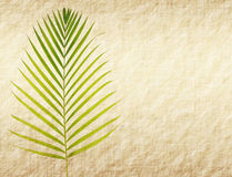 Paper background with palm leaf Royalty Free Stock Photography