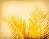 Paper background with palm leaf Royalty Free Stock Image