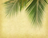 Paper background with palm leaf Royalty Free Stock Photo