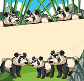 Paper background with panda in bamboo forest Royalty Free Stock Image