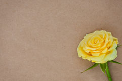 Paper background with rose. Royalty Free Stock Image