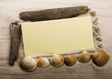 Paper background and seashell Royalty Free Stock Images