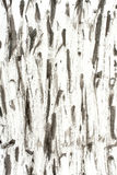 Paper background texture. Black splatter on the white paper as a texture Royalty Free Stock Photo