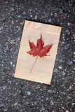 Paper bag autumn red leaf asphalt royalty free stock photography