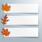 3 Paper Banners Autumn Foliage Stock Photos