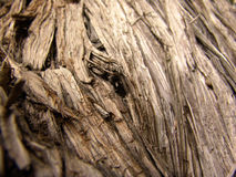 Paper Bark Stock Photography
