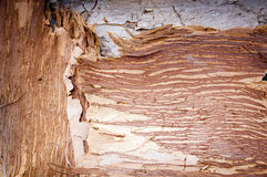 Paper Bark Background Royalty Free Stock Photography