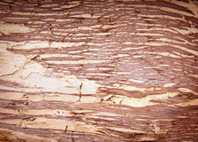 Paper Bark Background Stock Photography