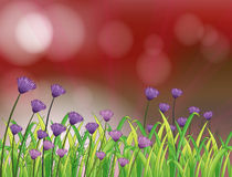 A paper with beautiful flowers Royalty Free Stock Photography