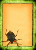 Paper with bed-bug. Torn out paper with bed-bug against green material background Stock Photography