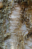 Paper Birch bark Stock Photography