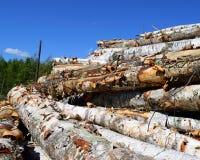 Paper Birch (Betula papyrifera) Logs Stock Images