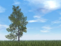 Paper birch tree - 3D render. Paper birch tree by day - 3D render Royalty Free Stock Images