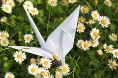 Paper bird and Daisies. White paper bird and Daisies royalty free stock photos