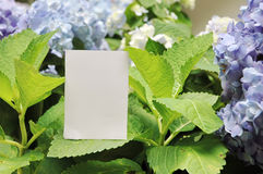 Paper blank with flowers Stock Images