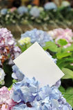 Paper blank with flowers Royalty Free Stock Image