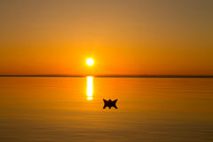 Paper boat floating in the water at sunset Royalty Free Stock Photo
