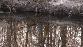Paper boats blue and brown float on the creek in the spring park. stock video footage