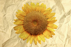 Paper box textured in crumpled of sunflower. Stock Image