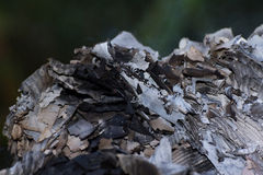 Paper burns. Ash from the burning paper. Beautiful colors and patterns Royalty Free Stock Images