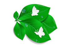 Paper butterflies and green leaves Royalty Free Stock Photo