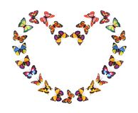 Paper Butterflies in Heart Shape. On White Background stock image