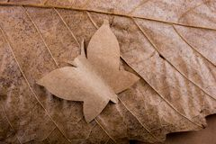 Paper butterfly Macro view of dry leaf texture Stock Photo