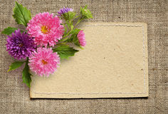 Paper card and aster flowers Stock Photography