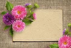 Paper card and aster flowers Royalty Free Stock Image