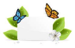 Paper card with butterflies. Paper card, butterflies and flower with water drops, illustration Stock Photos