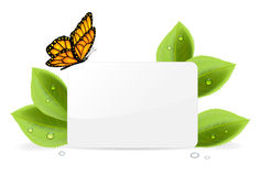 Paper card with butterfly. Paper card, butterfly and foliage with water drops, illustration Stock Images