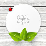 Paper card with green leaves. And ladybug Royalty Free Stock Image