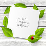 Paper card with green leaves. And ladybug Royalty Free Stock Photos