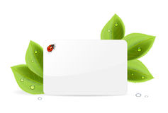 Paper card with ladybug. Paper card, ladybug and foliage with water drops, illustration Royalty Free Stock Photos