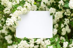 Paper Card Mockup on white flowers . summer background with copy space royalty free stock photo