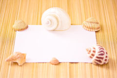 Paper card and sheels, add your text Royalty Free Stock Photography