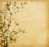 Paper with Cherry Blossom Royalty Free Stock Image